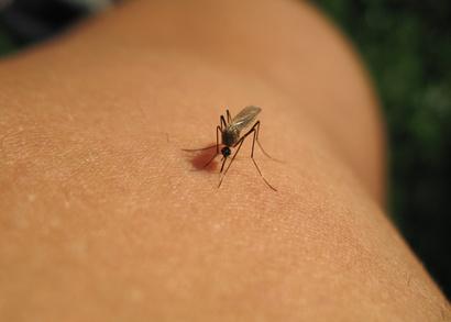 Mückenschutz Test